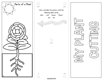 Teaching about plants…getting started.